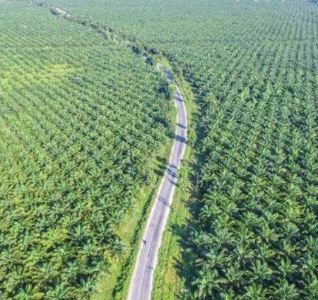 Komoditas Pertanian Unggulan Indonesia
