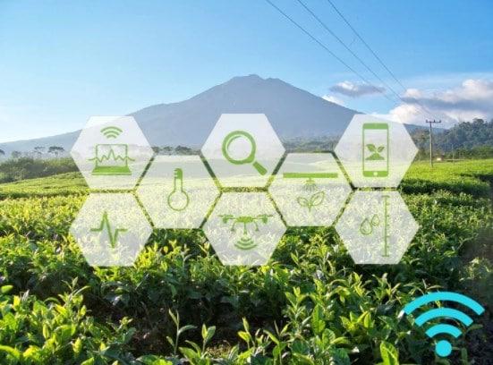 Pembangunan Perkebunan di Era Industri 4.0