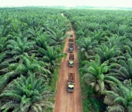 Teknologi Dalam Perkebunan Kelapa Sawit