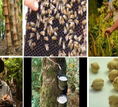 Produk Hasil Hutan Produksi