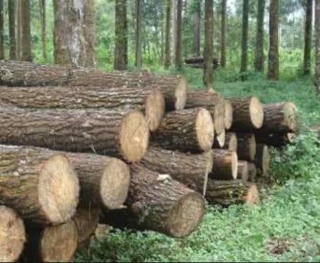 Pengertian Hutan Produksi, Jenis dan Sebarannya