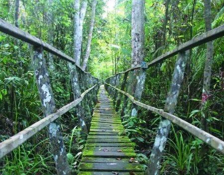 Manfaat Hutan Lindung dan Sebarannya
