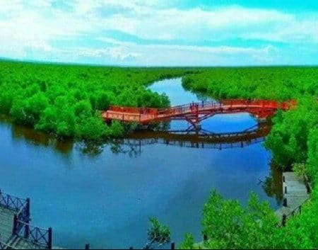 Pengertian Hutan Mangrove Hingga Persebarannya